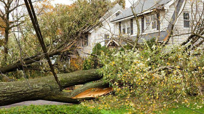 Hurricane Damaged Homes by Fallen Trees and Power Lines.