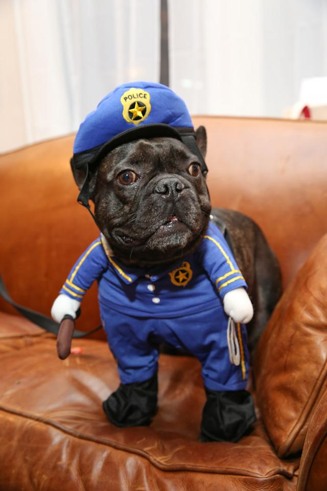<p>On patrol for the cutest Halloween costumes around. <i>(Photo: Petsmart)</i></p>
