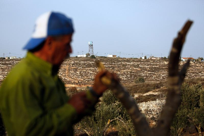 More than 7,000 Palestinian-owned trees have been vandalised so far this year, according to the United Nations (AFP Photo/ABBAS MOMANI)