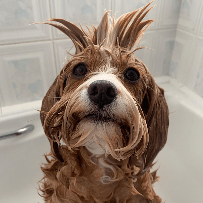 <p>Mable has quite an impressive hair-do! </p>