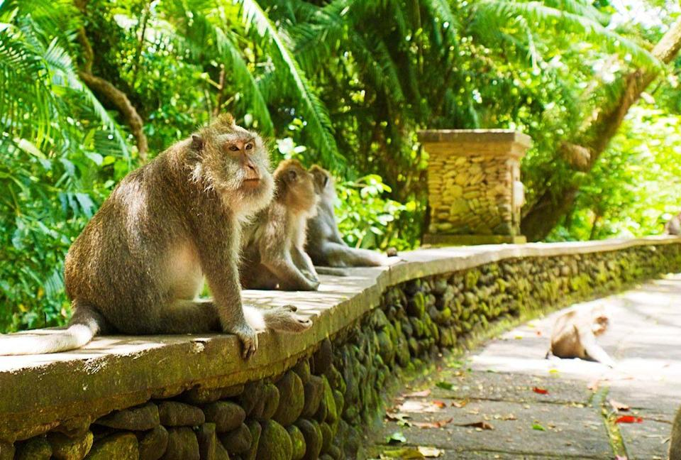 Monkeys are raiding homes in Bali after losing out on food from tourists due to COVID-19 restrictions