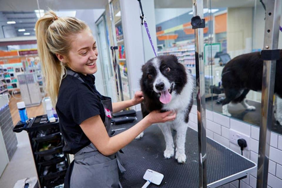 <p>Puppy sales have soared </p> (Pets At Home)