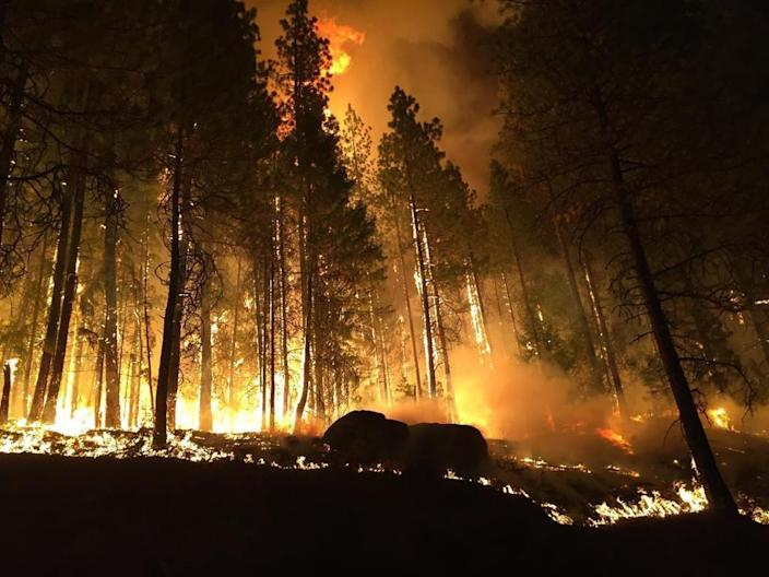 In 2015, a record-setting 10.1 million acres burned across the United States, including the Colville National Forest, pictured on August 25, 2015 (AFP Photo/)