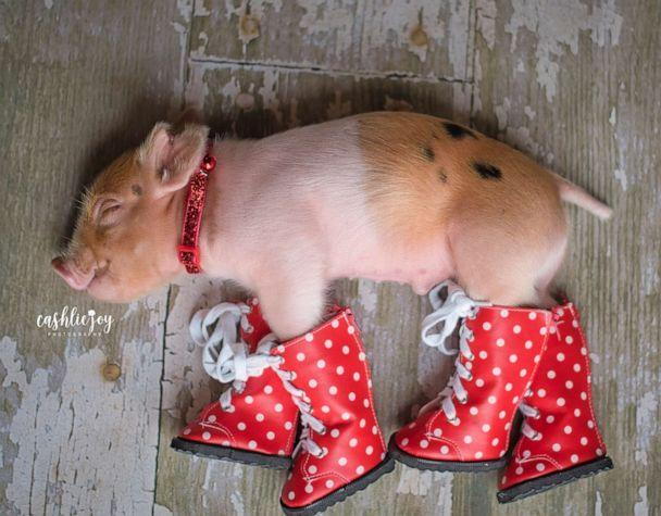 PHOTO: Dynamite lays down with polka dot boots on. (Cashlie Joy Photography)