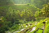 """<p><strong>What's the story behind this place?</strong><br> Tegalalang Rice Terrace, 20 minutes north of <a href=""""https://www.cntraveler.com/story/finding-the-bali-you-came-for?mbid=synd_yahoo_rss"""" rel=""""nofollow noopener"""" target=""""_blank"""" data-ylk=""""slk:Ubud"""" class=""""link rapid-noclick-resp"""">Ubud</a>, is one of Bali's most photogenic—and most-visited—destinations. The UNESCO World Heritage Site contains wide, undulating layers of rice paddies, kept alive by an ancient, sophisticated irrigation system and farmers who tend the terraces just as previous generations have done for millennia.</p> <p><strong>What's the best way to wander?</strong><br> You can explore this area freely. Take a short stroll or navigate its entire length; descend to some of the lower slopes (if the farmers don't mind) for a different vantage point; or grab a seat at an open-air cafe when you need a break. It won't be hard to find the famed """"Love Bali"""" swing; the swarm of picture-takers gives it away.</p> <p><strong>Anything else to know before planning a visit?</strong><br> This is one of Bali's most picturesque landscapes and, as such, you'll have to deal with the crowds. Arrive before 9 a.m. You'll also find farmers asking for donations (if you choose to oblige, give no more than 10,000 rupiah—just under a dollar), and pestering hawkers.</p>"""