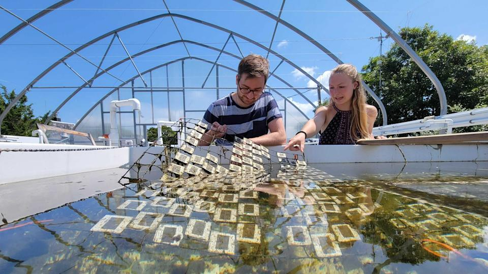Researchers look at the effect sunlight has on plastics (WHOI)