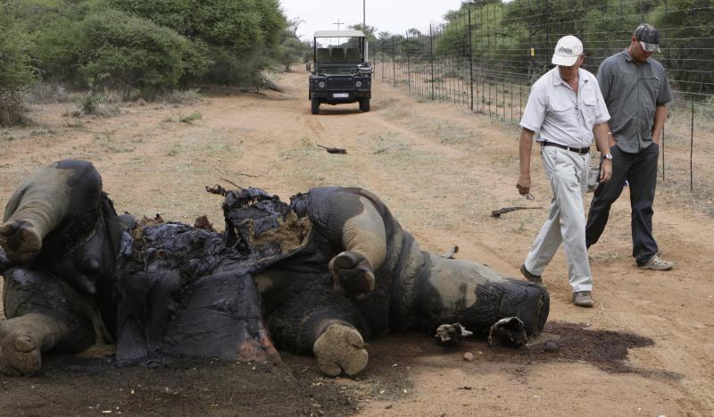 In this photo taken Friday, Nov. 22, 2012, Miles Lappeman, owner of Finfoot Lake Reserve near Tantanana, South Africa, and his son Marc, right, walk past the carcass of a rhino. South Africa says at least 588 rhinos have been killed by poachers this year alone, 8 rhinos at the Finfoot Lake Reserve, the worst recorded year in decades. The number has soared as buyers in Asia pay the U.S. street value of cocaine for rhino horn, a material they believe, wrongly, medical experts say, cures diseases. (AP Photo/Denis Farrell)