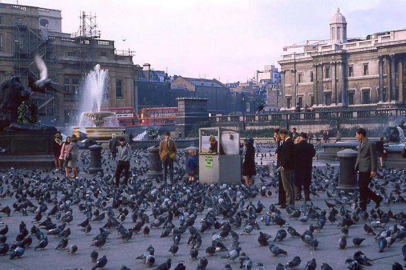 Feed the birds: Pigeons swarm in Trafalgar Square in a photo taken during the 1960s. (Gary Nordquist)