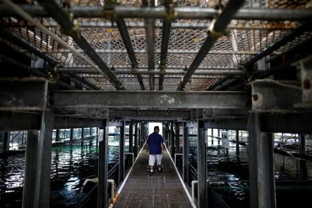 Apollo Aquaculture Group CEO Eric Ng checks on his fish at his prototype vertical fish farm in Singapore
