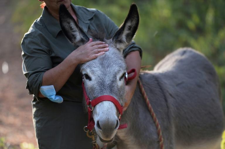 What's up doc? Donkey therapy eases Spain medics' stress