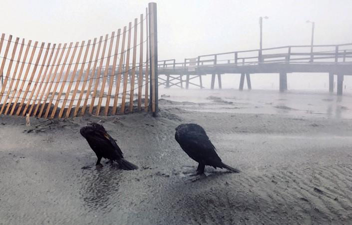 Birds huddle against the wind and rain of Hurricane Florence at the Oceana Pier in Atlantic Beach, N.C. Friday morning, Sept. 14, 2018.