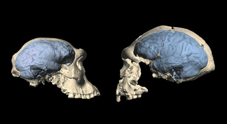 This photo from the University of Zurich shows skulls of early homo from Dmanisi, Georgia (specimen D4500, L) and Sangiran, Indonesia (specimen S17, R)