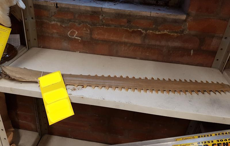 A sawfish rostrum was among the items linked to Halstead. (PA/Lancashire Police)