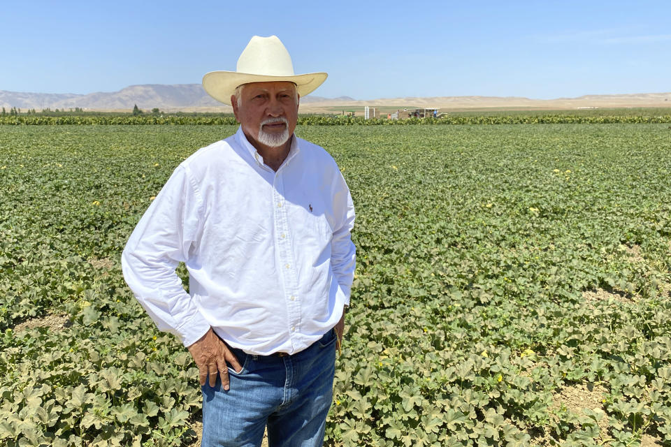 Joe Del Bosque, owner of Del Bosque Farms, stands in a melon field in Firebaugh, Calif., on Friday, July 9, 2021, where temperatures were expected to surpass 110 degrees this weekend. (AP Photo/Terry Chea)