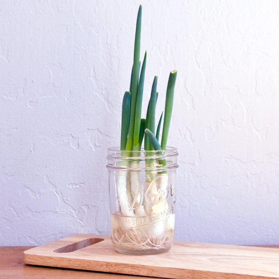Grenen Tv Kast White Wash.This Green Onion Hack Is So Easy No Wonder It S Making The Rounds