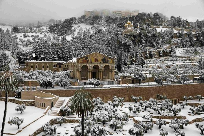 Snow covers the Garden of Gethsemane at the foot of the Mount of Olives in Jerusalem February 20, 2015. Snow covered Jerusalem and mountainous areas of Israel early Friday morning and the education ministry closed schools for the day. (REUTERS/Ronen Zvulun)