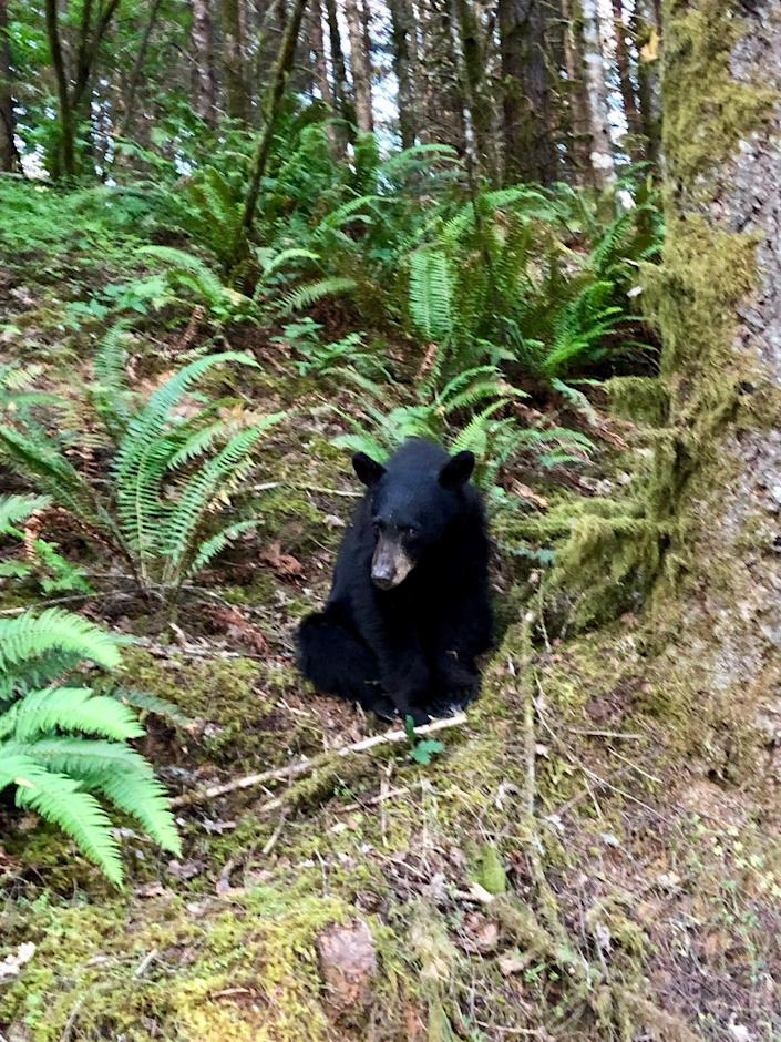 A young black bear was shot and killed by Oregon officials after becoming so habituated to humans that people reportedly took selfies with it.