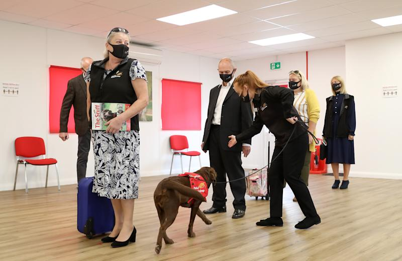 MILTON KEYNES, ENGLAND - SEPTEMBER 09: A general view of a demonstration showcasing how a dog could learn to detect the COVID-19 virus during a visit by Camilla, Duchess of Cornwall, Patron of Medical Detection Dogs, at the charity's training centre on September 09, 2020 in Milton Keynes, England. Trials are currently underway to determine whether dogs can act as a diagnostic tool of COVID-19. (Photo by Chris Jackson - WPA Pool/Getty Images)