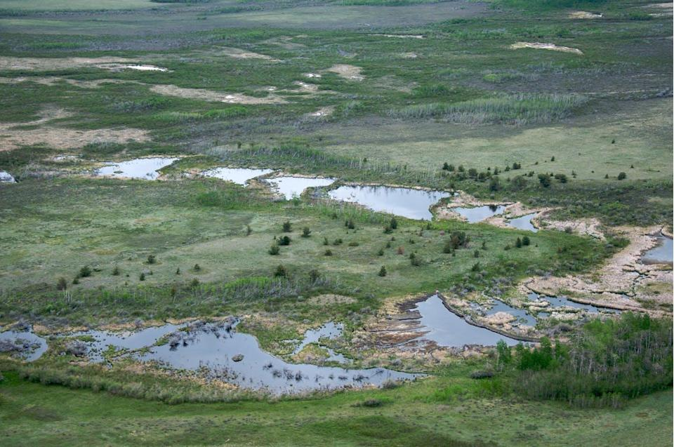 aerial view of sequential beaver dams in a wetland