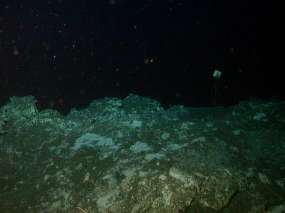 Carbonate rocks at Hydrate Ridge, Oregon, about 2,625 feet (800 meters) below the sea surface. In this cold, dark environment, methane seeps feed microbes living in mud and rock.