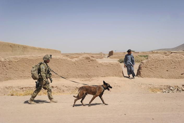 A Belgian Malinois similar to Dasty,  here with Army Specialist Justin Coletti of US Forces Afghanistan K-9 combat tracker team in Kandalay village, Kandahar province in Aug. 5, 2011 helped  in the raid that killed Abu Bakr al-Baghdadi.