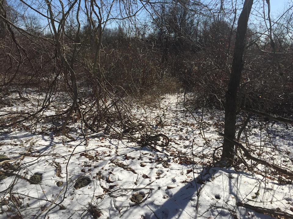 A thick and frayed area of Donald J. Trump State Park's Indian Hill section. (Photo: Michael Walsh/Yahoo News)