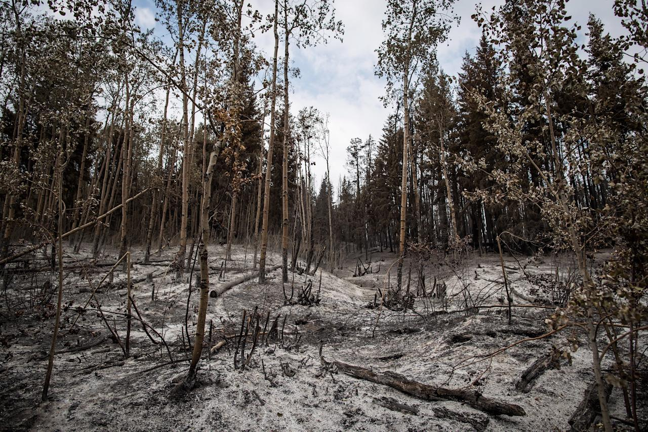 <p>Ash covers the ground in an area burned by the Shovel Lake wildfire, near Fort Fraser, B.C., on Thursday, Aug. 23, 2018.<br />(Photo by Darryl Dyck, The Canadian Press) </p>