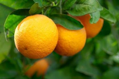 """<p>Pucker up! Lemons, limes, oranges and grapefruits can all help your brain stay healthy, Kirkpatrick says. Whether you're including it in a salad dressing, sipping on lemonade or squirting it on tacos, get some citrus in your daily diet. """"Studies show that people who have citrus fruits every day are able to prevent cognitive decline by more than two years,"""" she says.</p><p><i>(Photo: iStock) </i></p>"""