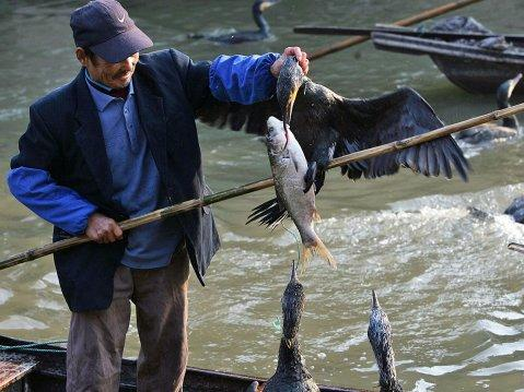 514c6d0432e cormorant fishing