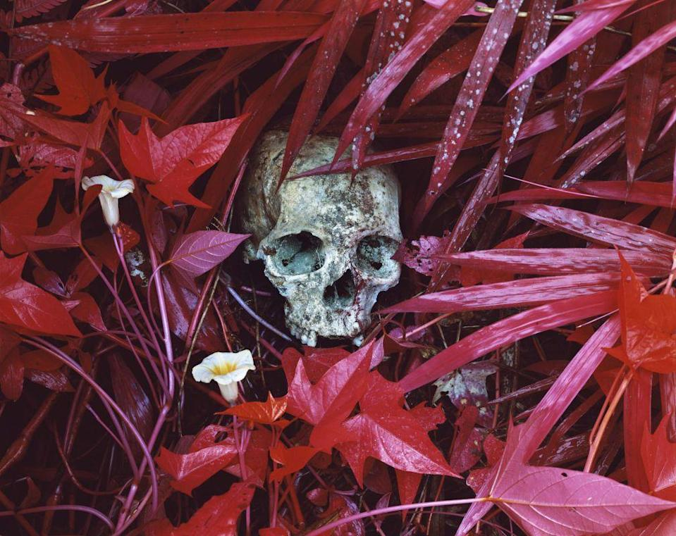 Photo credit: © Richard Mosse, courtesy of the author, DZ Bank Art Collection