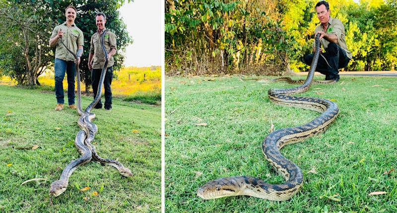 Jason Legg and Matt Hagan, from Cairns Snake Catcher, remove a breeding pair of 20kg scrub pythons which crashed trough a Cairns ceiling. Source: Cairns Snake Catcher / Facebook
