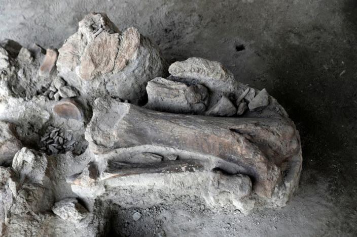 Mammoth bones are pictured at a site where archaeologists and worker of Mexico's National Institute of Anthropology and History (INAH) work and where more than 100 mammoth skeletons have been identified, in Zumpango