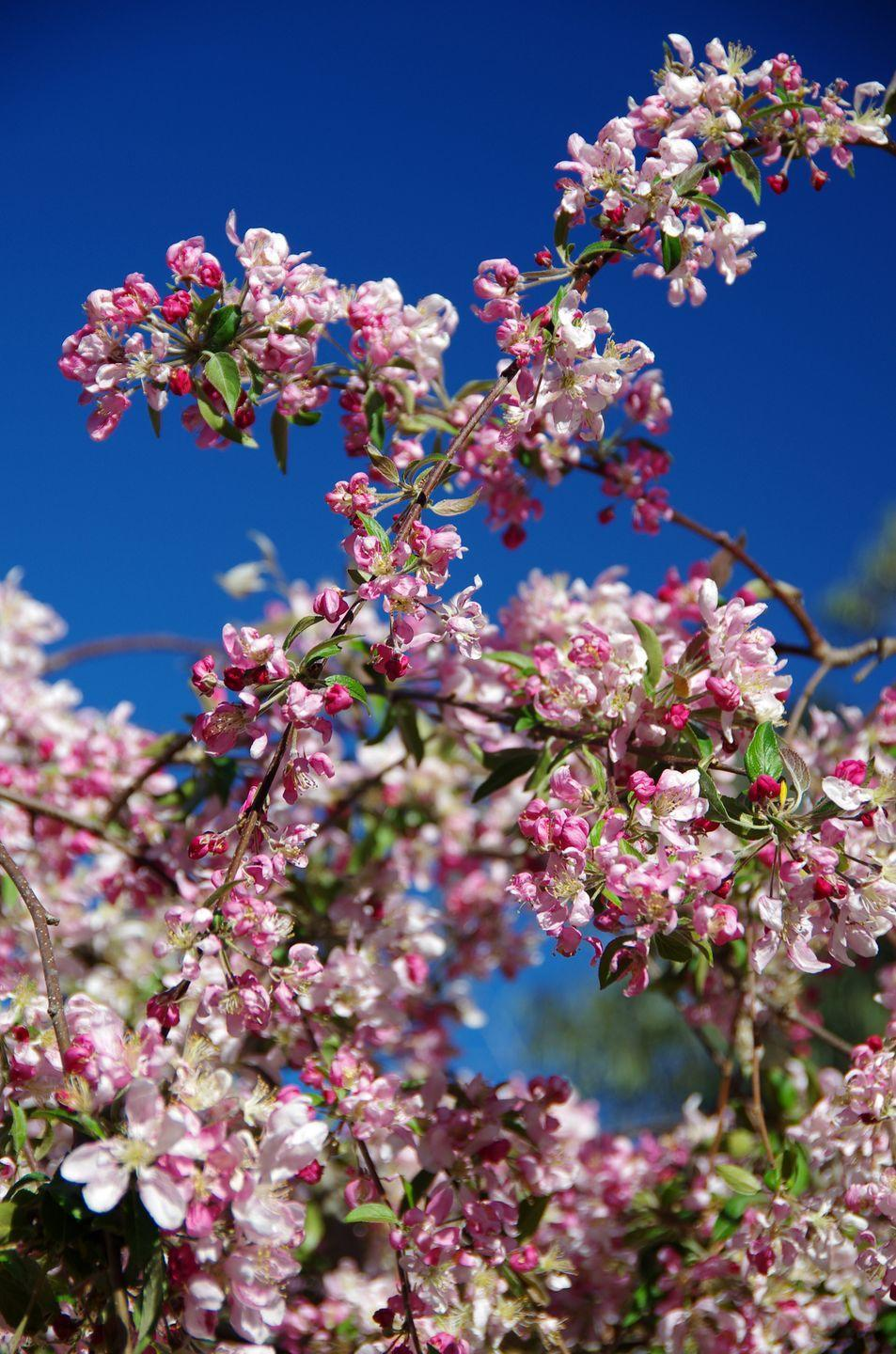 """<p>Considering their size and longevity, trees are very inexpensive and just a few will make a difference to the look of a garden. Try small trees like June berry, <a href=""""https://go.redirectingat.com?id=127X1599956&url=https%3A%2F%2Fwww.thompson-morgan.com%2Fp%2Famelanchier-lamarckii%2Ft58264TM&sref=https%3A%2F%2Fwww.redonline.co.uk%2Finteriors%2Feditors_choice%2Fg35933369%2Fgarden-ideas-on-a-budget%2F"""" rel=""""nofollow noopener"""" target=""""_blank"""" data-ylk=""""slk:Amelanchier lamarckii"""" class=""""link rapid-noclick-resp"""">Amelanchier lamarckii</a>, an ornamental cherry like <a href=""""https://go.redirectingat.com?id=127X1599956&url=https%3A%2F%2Fwww.thompson-morgan.com%2Fp%2Fprunus-x-incam-okam%2Ftka3398TM&sref=https%3A%2F%2Fwww.redonline.co.uk%2Finteriors%2Feditors_choice%2Fg35933369%2Fgarden-ideas-on-a-budget%2F"""" rel=""""nofollow noopener"""" target=""""_blank"""" data-ylk=""""slk:Prunus × incam 'Okamé'"""" class=""""link rapid-noclick-resp"""">Prunus × incam 'Okamé'</a>, or a crab apple. Three should be plenty for an average sized garden. </p>"""