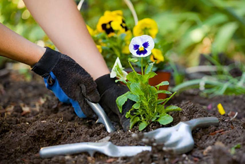 "<p>Visit the local nursery and have Mom pick out some new flowers or vegetables for her garden, then help her plant them. Pitch in with weeding or watering while you're at it—she'll appreciate the gesture.</p><p><strong><a href=""https://www.countryliving.com/shopping/gifts/g1055/gardening-gift-ideas/"" rel=""nofollow noopener"" target=""_blank"" data-ylk=""slk:Shop best gardening gifts Mom needs now"" class=""link rapid-noclick-resp"">Shop best gardening gifts Mom needs now</a>.</strong></p>"