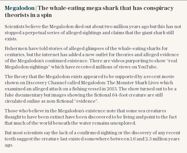 Megalodon | The whale-eating mega shark that has conspiracy theorists in a spin