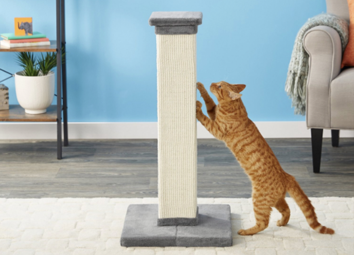 Getting Your Cat a Scratching Post