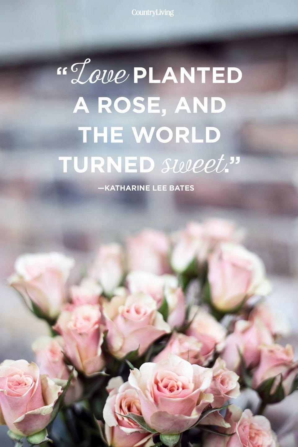"""<p>""""Love planted a rose, and the world turned sweet.""""</p>"""
