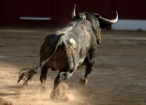 Bull wounds anti-bullfighting activist in French arena