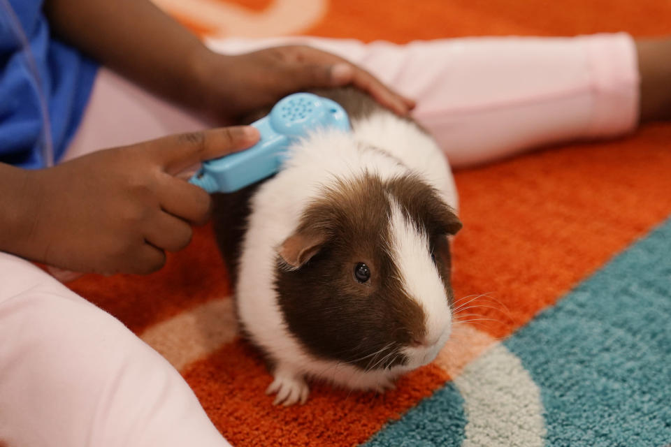 A Pre-K student plays with the class guinea pig, Tuesday, Aug. 17, 2021, in Oklahoma City. Positive Tomorrows, an Oklahoma City school exclusively for students in families experiencing homelessness, received money from Gov. Kevin Stitt's Stay in School program and forgivable Paycheck Protection Program loans from the federal government. (AP Photo/Sue Ogrocki)