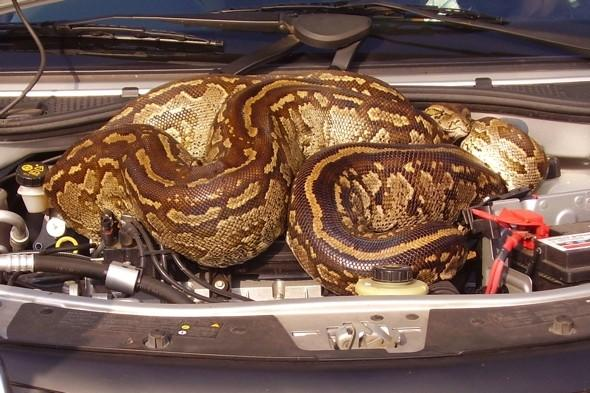 Couple find huge snake in car on holiday in South Africa