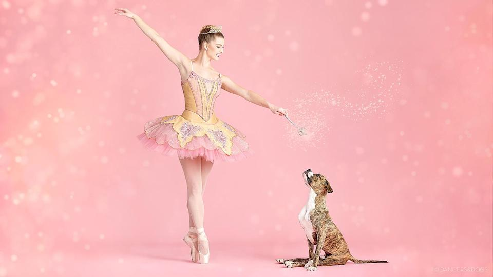 """<p>Dance of the sugar plum...puppies? The <a href=""""https://people.com/pets/st-louis-ballet-dancers-poses-adoptable-pets/"""" rel=""""nofollow noopener"""" target=""""_blank"""" data-ylk=""""slk:St. Louis Ballet lent a little Nutcracker magic to adoptable shelter pets"""" class=""""link rapid-noclick-resp"""">St. Louis Ballet lent a little <em>Nutcracker</em> magic to adoptable shelter pets</a> in hopes of finding them homes.</p>"""