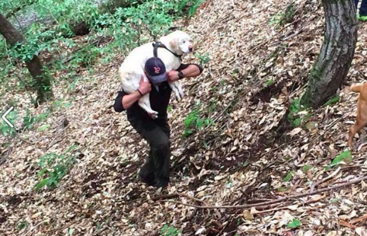 Blind dog Sage had to be carried to safety after she was found in the Californian mountains (Facebook)
