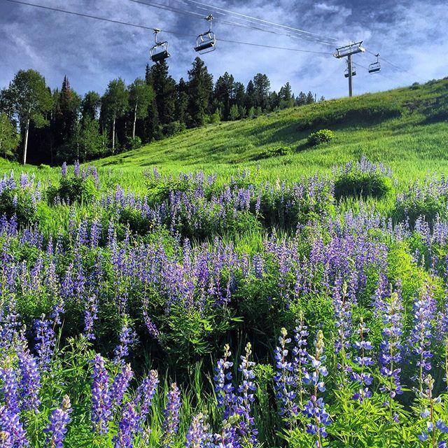 "<p>Occasionally overlooked as being (slightly) out of town, <a href=""https://www.gosnowmass.com/"" rel=""nofollow noopener"" target=""_blank"" data-ylk=""slk:Snowmass Village"" class=""link rapid-noclick-resp"">Snowmass Village</a> has been drawing intrepid travelers to its own universe of charm and adventure since 1967. With 3,362 acres of skiable terrain in the winter, black diamond runs are converted to nearly 3,000 vertical feet of the <a href=""https://www.imba.com/ride/where-to-ride/ride-centers"" rel=""nofollow noopener"" target=""_blank"" data-ylk=""slk:IMBA Gold-Level"" class=""link rapid-noclick-resp"">IMBA Gold-Level</a> downhill mountain bike trails in summer, welcoming riders of all technical ability. </p><p>For accommodations, <a href=""https://www.viceroyhotelsandresorts.com/snowmass"" rel=""nofollow noopener"" target=""_blank"" data-ylk=""slk:The Viceroy Snowmass"" class=""link rapid-noclick-resp"">The Viceroy Snowmass</a> celebrates its 10-year anniversary in 2020. The rooms, residences, and 7,000 square feet spa are the perfect place to camp out (without actually camping out). While Chef Richard Sandoval's Pan-Latin establishment, <a href=""https://www.viceroyhotelsandresorts.com/snowmass/dining-nightlife/toro"" rel=""nofollow noopener"" target=""_blank"" data-ylk=""slk:TORO Kitchen and Lounge"" class=""link rapid-noclick-resp"">TORO Kitchen and Lounge</a> delivers fine dining at 8,000 feet above sea level. </p><p>For a little culture, visit <a href=""https://www.andersonranch.org/"" rel=""nofollow noopener"" target=""_blank"" data-ylk=""slk:Anderson Ranch Arts Center"" class=""link rapid-noclick-resp"">Anderson Ranch Arts Center</a>. For more than 50 years, it has been one of the most prestigious visual arts programs in the country, normally welcoming artists residencies and more than 100 workshops per season. Due to COVID-19, most are available via Zoom; however, an exciting new outdoor sculpture exhibition, ""Sculpturally Distanced: an Anderson Ranch Outdoor Exhibition"" opened on July 6th and will remain installed through September 2021. Finally, don't miss the 45th anniversary of the<a href=""https://www.gosnowmass.com/event/snowmass-balloon-festival/"" rel=""nofollow noopener"" target=""_blank"" data-ylk=""slk:Snowmass Balloon Festival"" class=""link rapid-noclick-resp""> Snowmass Balloon Festival</a> (September 11-13) where hot air balloons from all over take to the sky for a truly unforgettable sight.</p><p><a href=""https://www.instagram.com/p/Bzf1hYnHWd0/?utm_source=ig_embed&utm_campaign=loading"" rel=""nofollow noopener"" target=""_blank"" data-ylk=""slk:See the original post on Instagram"" class=""link rapid-noclick-resp"">See the original post on Instagram</a></p>"