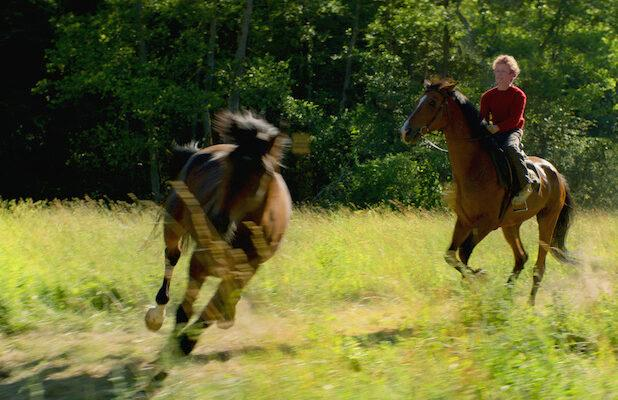 Stellan Skarsgard Drama 'Out Stealing Horses' Acquired by Magnolia Pictures