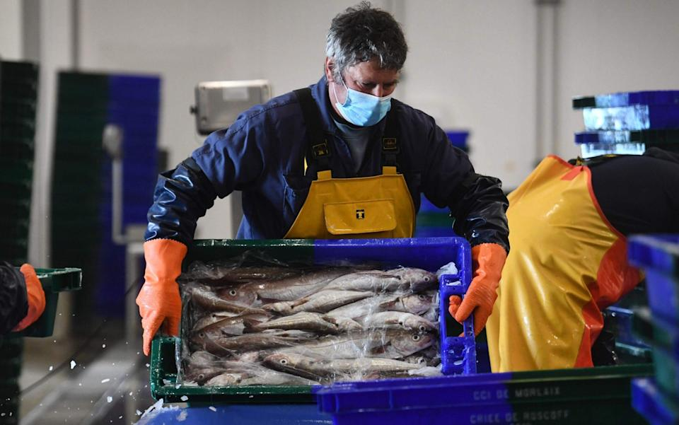 Workers unload fish in the port of Roscoff, western France on November 12 - FRED TANNEAU/AFP