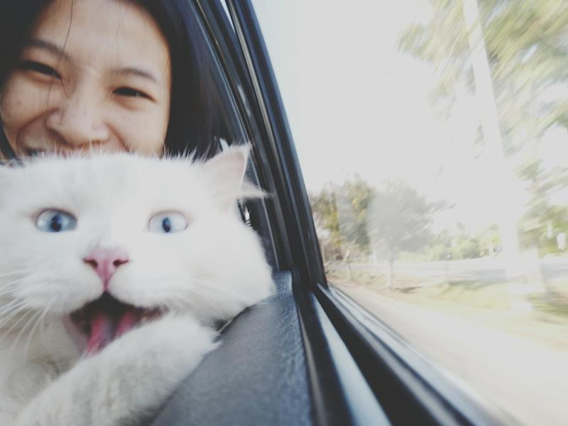Woman in car with cat. (Photo: Getty Images)