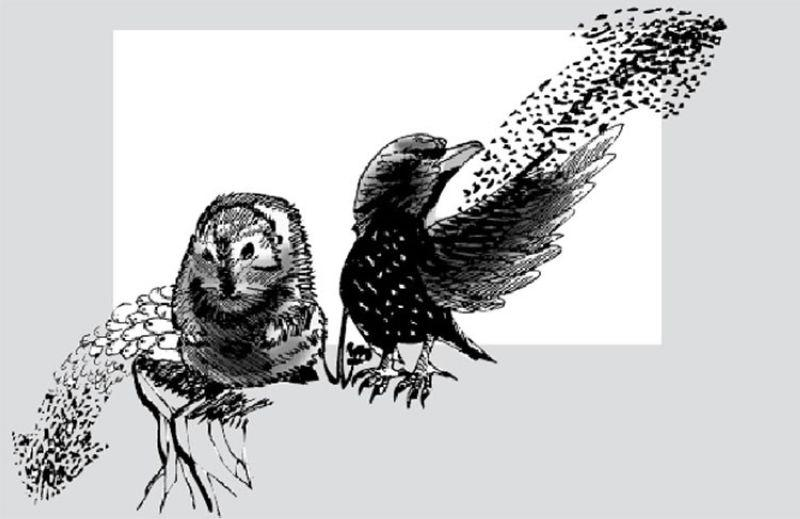 Editorial: People are starlings, not lemmings