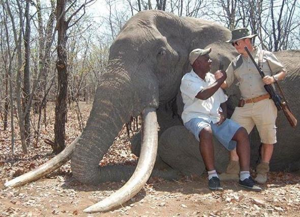 Elephant killed by German hunter in Zimbabwe