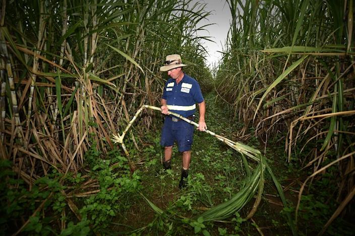 Simon Mattsson, an Australian farmer who is an expert at taking carbon from the air and putting it into the ground, is also diversifying his crops as a way to help the soil quality on his Queensland farm (AFP Photo/PETER PARKS)