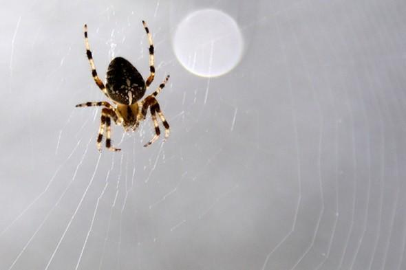Essex woman almost dies after being bitten on the bottom by spider in Spain
